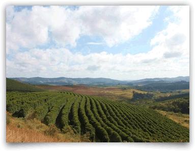 coffee4missions_brazil_cerrado
