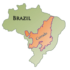 coffee4missions_brazil_cerrado_map